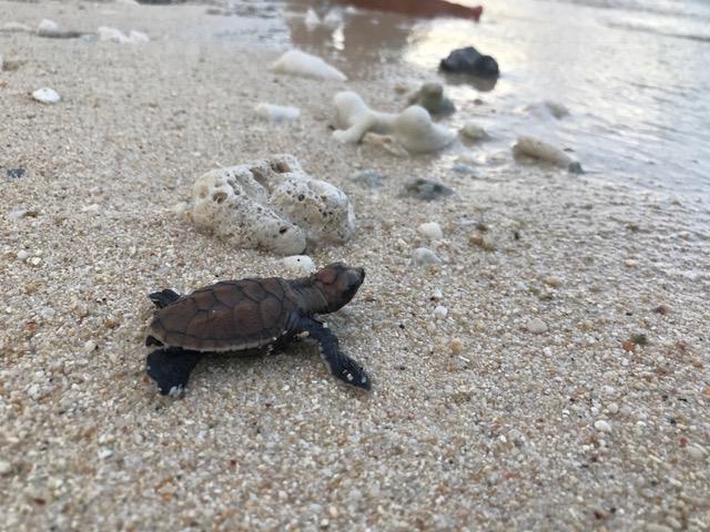 Sköldpaddor och delfiner